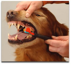 brushingdogteeth