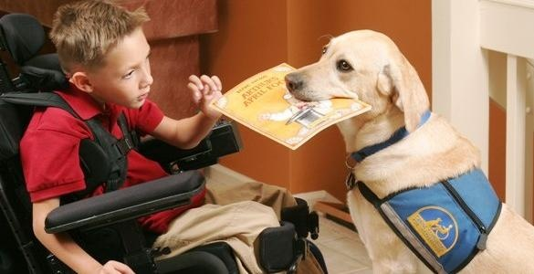 American With Disability Act Service Dogs