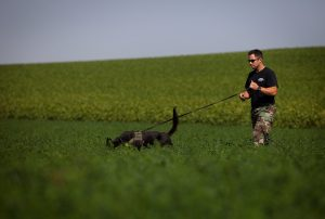 Dog Tracking Classes Northern Virginia