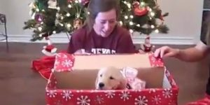 Getting a Dog for Christamas