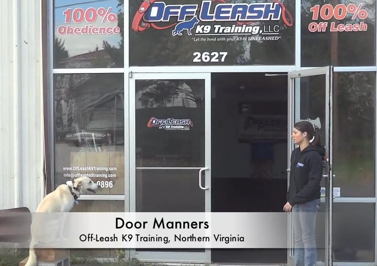 How To Stop My Dog From Running Out The Door Dog Training Northern