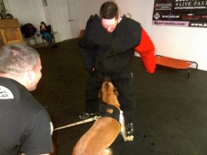Personal Protection Dog Training in Northern Virginia