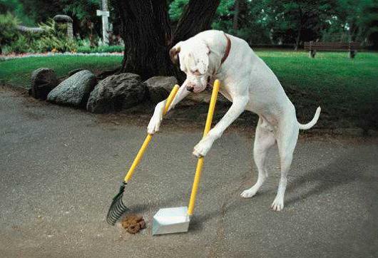 How Long Should I Work My Dog On Obedience Per Day Dog Training Northern Virginia Northern Virginia Dog Training Blog