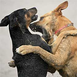 dog aggressive dog northern virginia