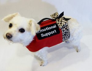 Dog Training Emotional Support Northern Virginia