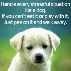 Stress in Dog Training Virginia
